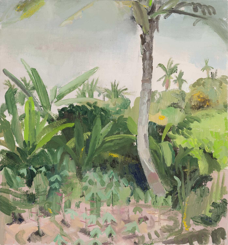 Umgeben von Stauden und Palmen im Bildmittel- und -hintergrund zeigt das Bild im Vordergrund ein Maniokfeld mit jungen Pflanzen auf Sansibar.